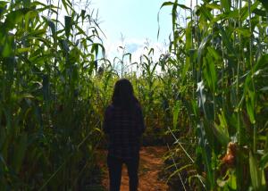 woman in a corn maze